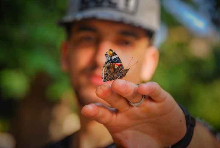brown and black butterfly on man s hand